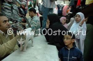 lkr 300x199 Стриптиз и драка в  Каирском бутике