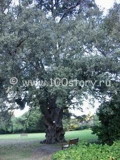 tree Скучные деревья