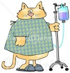 6322 Orange Tabby Cat With An IV Dispenser In A Hospital Clipart Picture1 145x150 Кот обормот