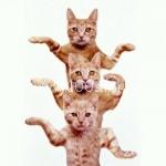7646817 cats b 150x150 Кошачья любовь
