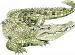 1265937840 1 150x110 Машка крокодилица