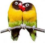 parrot Летние приколы