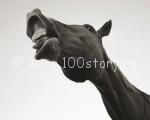 kon 150x120 Конь под градусом