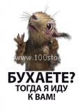 Belochka 119x160 Белка после праздников