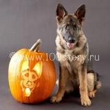 dog zombi 160x160 13 чертей собачьих