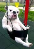 dog 112x160 13 чертей собачьих