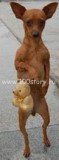 doggi 59x160 Мелкий герой