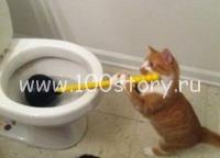 cat in order Важней всего порядок в доме