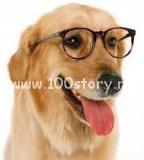 clever dog 144x160 Собака соображака