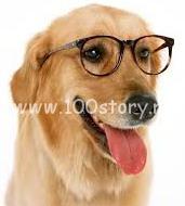 clever dog Пес инженер