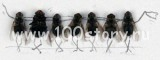 myxu 160x60 Летние мужские пакости