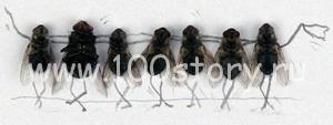 myxu Либо мухи, либо женщины