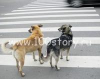 dogs on avtoroad Собачий перекресток