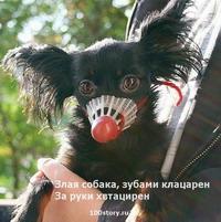 smalldog Какая собака лучше?