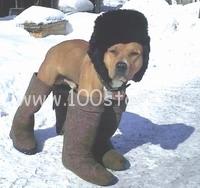 pes v valenkax Сушим валенки