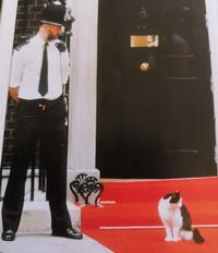 cat primeminister Кот и премьер министр